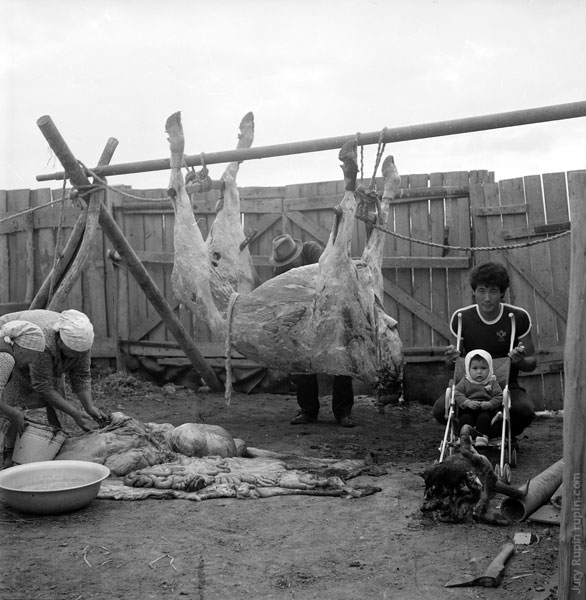 Death of a Cow, 1985